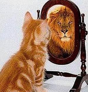 Samozavest serijsko